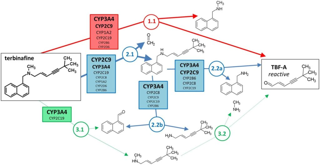 Involvement of cytochrome P450s in terbinafine metabolism