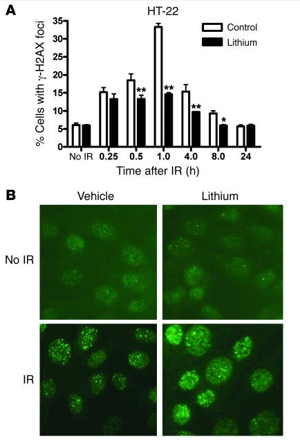 Lithium enhanced the percentage of cells with IR-induced T2609 foci in mouse HT-22 neuronal cells via induction of DNA-PK dependent NHEJ repair.