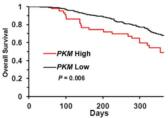 Population with higher PKM expression will have lower survival.